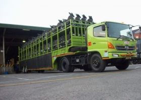 Gallery   3b_our_service_motor_carrier_mt_armada_kmdi_350x250