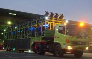 Our Services Motor Carrier 2 3b_our_service_motor_carrier_mt_motor_carrier_services_7_350x250
